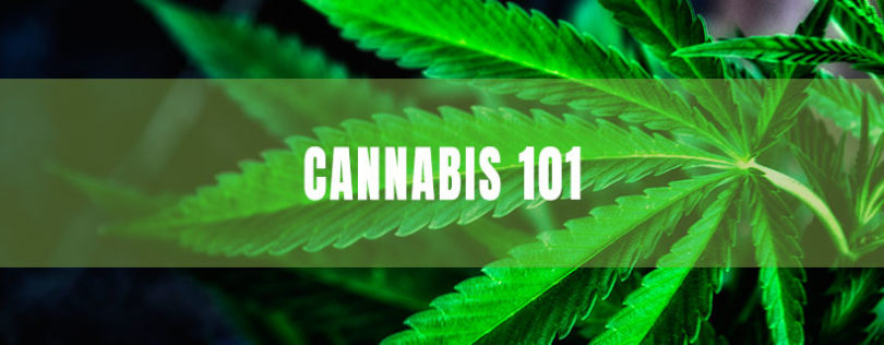 Medical Cannabis 101